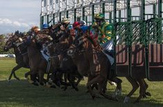 Travel Tag: Henriettes travelfacts- en confessions #horses #paardrijden #paarden