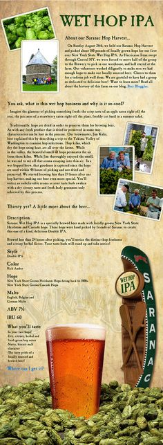 Saranac Hop Fest....help the brewers pick local hops for their Wet Hop IPA