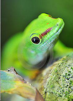 Listen to the Frog! It knows best!  http://blog.bidleaf.com/videos/the-lizard-speaks/