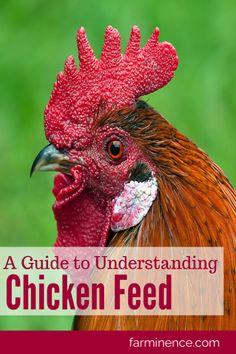 What to Feed to Chickens- Understanding Chicken Feed - Health insurance What To Feed Chickens, Types Of Chickens, Raising Backyard Chickens, Keeping Chickens, Meat Chickens, Organic Chicken Feed, Fresh Chicken, Chicken Eggs, Farm Chicken