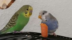 Lotti und Ricky
