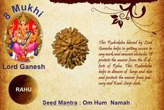 Benefits of Eight Mukhi Rudraksha God: Lord Ganesh / Ruling Planet: Rahu This Rudraksha blessed by Lord Ganesha helps in getting success in any work and removes obstacles. It protects the wearer from the ill effects of Rahu. This Rudraksha helps in diseases of lungs and skin and protects the wearer from jealousy and Kaal-Sarp-dosh. http://www.rudralife.com/Rudraksha/details.php?id=15