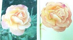 How to Paint a Rose in Watercolor by Susie Short - Painting Roses - Free Lesson