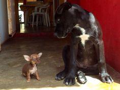 #Tor & #Pepita #Dog