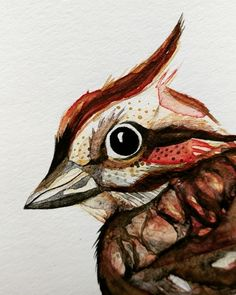 """The gold doesn't translate as well digitally but you can see how I made it over on my @YouTube as """"catgraff"""". #gold #song #sparrow #wip #process #love #colour #art #artist #pencil #graphite #nature #creature #watercolor #watercolour #illustration #expression #relaxation #therapy #video #paint #nature #relax #youtuber"""