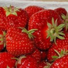"""Sorte Bei der """"Sonata"""" wurden zwei besonders attraktive Sorten kombiniert, denn sie vereint sowohl den reichen Ertrag als auch das tolle Aroma ihrer Elternsorten in sich. Ob einfach pur genossen, in Desserts mit Joghurt, kreativen Salaten oder einfach als Marmelade, Erdbeeren sind in jeglicher Form ein Hochgenuss und für viele das Highlight des Gartenjahres. Das beliebte Rosengewächs lässt sich schon auf kleinstem Raum anbauen und liefern wertvolle Nährstoffe und Antioxydanzien. Anbau… Unique Art, Smoothie Recipes, Fine Art America, Succulents, Strawberry, Nutrition, Fruit, Hd Wallpaper, Wallpapers"""