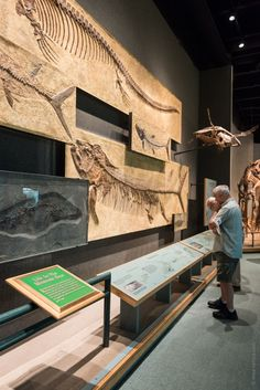 The Prehistoric Journey exhibition at The Denver Museum of Nature and Science