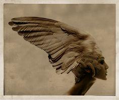 Giovanni Gastel, Series fallen angels