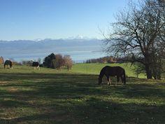 """Miten mahtava ratsastusvuosi Fux-ponin kanssa maastoillessa aivan huikeissa maisemissa <3  Lue postaus """"Pumpulivuosi Fux-ponin kanssa"""" ja katso upeat kuvat!"""