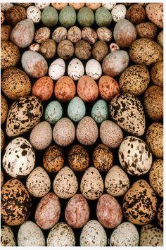 Beautiful birds eggs.