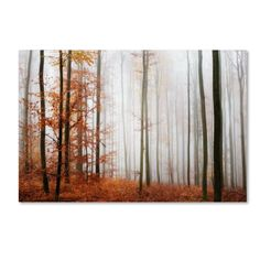 'Forest Corner' by Philippe Sainte-Laudy Photographic Print on Wrapped Canvas