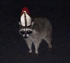 It's the Raccoon Pope! Stupid Memes, Dankest Memes, Funny Memes, Funny Animals, Cute Animals, Racoon, Oui Oui, Cursed Images, Mood Pics