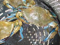 Image result for crabbing Augusta w Image
