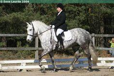 New Forest Pony x Haflinger mare Arabella