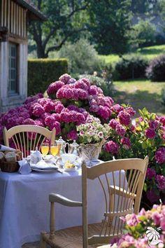 Breakfast beside the hydrangeas
