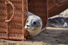 Sea Lions, Make It Rain, Seals, Type 3, Funny Animals, Theater, Creatures, Facebook, Yellow