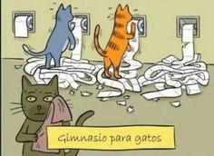 .Gimnasio para gatos ( Ya sabes pq Cloe lo hace.)                                                                                                                                                                                 More