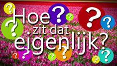 Hoe zit dat eigenlijk 2: Hoe groeien en bloeien bloembollen?