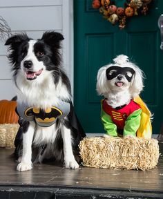 Whether you're heading to the neighborhood puppy parade or hanging back for trick-or-treaters, make sure your furry friends are all decked out for Halloween. Featured product: DC Comics Batman and DC Comics Robin pet costumes. Find Halloween costumes for the entire family at Kohl's.