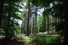 Anderwood, New Forest  By Neil Hunter