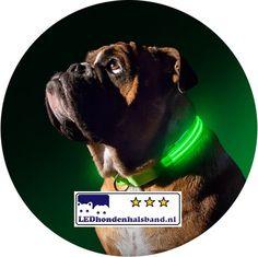 hondenhalsband met led verlichting voor uw hond in alle kleuren en maten maak uw hond