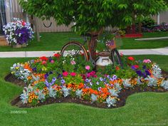 Star shaped flower garden around the tree. Inspires me to think about a scalloped shaped garden.