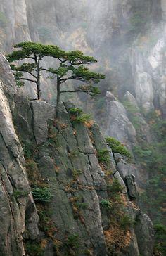 jugda:    Landschaften - Huangshan (by david goetz)