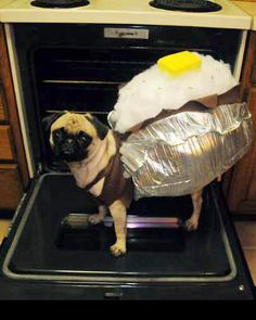 It's a baked pugtato!