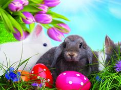 easter-bunny-1600x1200-wallpaper.jpg (1600×1200)
