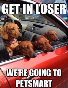 Get In Loser, We're Going To Pet Smart,  Click the link to view today's funniest pictures!