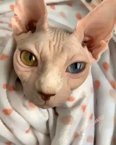 15 Most Toxic Foods For Cats in 2020 - cute cats love Cute Funny Animals, Cute Baby Animals, Animals And Pets, Cute Cats, Funny Cats, Chat Rex, Bb Chat, I Love Cats, Crazy Cats