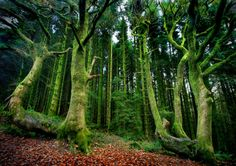 Emerald Woods - Photography:Brecon Beacons