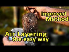 An air layering method - The easiest and most reliable air layer method, you will ever use to create a copy of a fruit tree. It clones your tree effectively . Veg Garden, Water Garden, Organic Gardening, Gardening Tips, Kitchen Gardening, Urban Gardening, Flower Gardening, Urban Farming, Air Layering