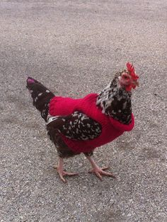 10+Chickens+Wearing+Sweaters,+Because+It's+Wednesday  - CountryLiving.com