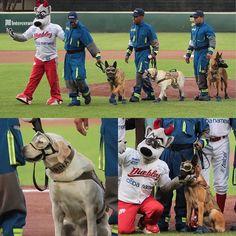 b28505c68 El equipo de beisbol Diablos Rojos de México hizo un homenaje al personal  de la Secretaría