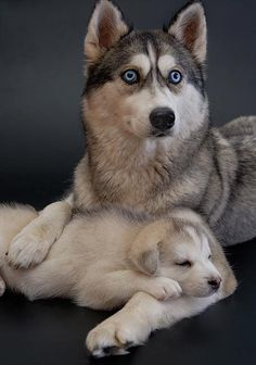 Leia and puppy by MMR2001.deviantart.com on @deviantART