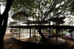 ツリーハウス型の教室。ガラス張りの教室と大木が一緒の部屋なんて素敵!
