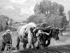 The ox is slow, but the Earth is patient. High Road to China.