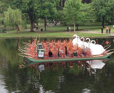 Swan Boat, Boston Public Garden. Carly Carson