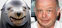 Walrus Shawn - Inconceivable...