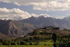 Ladakh, PHYANG MONASTERY.  Phyang gompa beautifully surrounded by Himalayan…