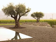 Andrea Cochran's Landscapes   Garden Design