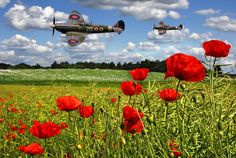 Spitfires And Poppy Field Photograph