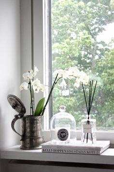 Auf der Fensterbank gedeihen Orchideen sehr gut