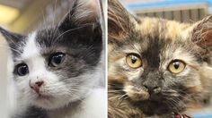 Meet 10 sweet kittens available for adoption