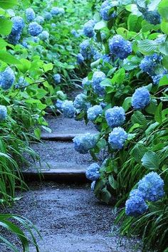 Garden path by hanabi. on Flickr.......