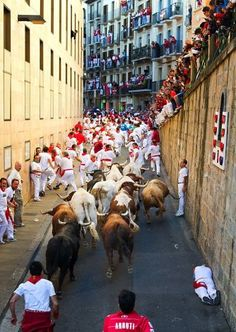 PAMPLONA, SPAIN - JULY 13:  Revelers run, with one of them laying facedown under the San Fermin statue, with Don Juan Pedro Domecq's fighting bulls up la cuesta de Santo Domingo on the seventh day of the San Fermin running-of-the-bulls on July 13, 2012 in Pamplona, Spain. Pamplona's famous Fiesta de San Fermin, which involves the running of the bulls through the historic heart of Pamplona for eight days starting July 7th, was made famous by the 1926 novel of U.S. writer Ernest Hemmingway…