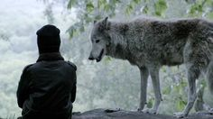 White Wolf : Marina Kaye, a 16 yr. old singer, interacts with wolves in an amazing video clip. Marina Kaye, Old Singers, White Wolf, Video Clip, Wolves, Wildlife, Animals, Amazing, Google