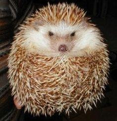 Image result for hedgehog cupcakes