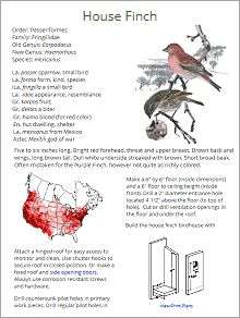 Birdhouse plans for 70 bird species that nest in birdhouses. Increase your chances of attracting a bird family with the right birdhouse in the right place. Love Birds, Beautiful Birds, Plant Insects, Hummingbird Food, Bird House Plans, Bird Theme, How To Attract Birds, Backyard Birds, Birdwatching